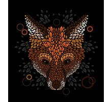 Fox Face Photographic Print