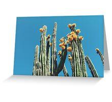 Mexican Organ Pipe Cactus Greeting Card
