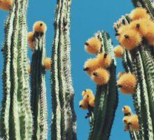 Mexican Organ Pipe Cactus Sticker