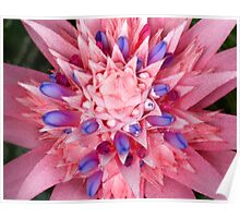 Tropical Pink Burst Flower  Poster