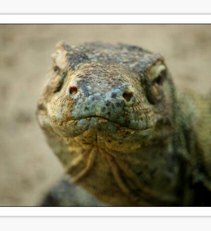 Komodo Dragon Sticker