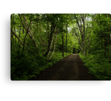 Summer Forest Tranquility - Beautiful Charlevoix, Quebec, Canada Canvas Print