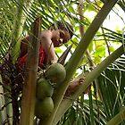 Gathering Coconuts - Pohnpei, Micronesia by Alex Zuccarelli