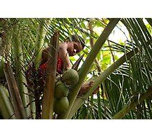 Gathering Coconuts - Pohnpei, Micronesia Photographic Print