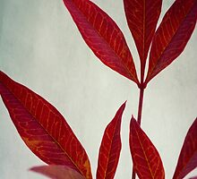 New Leaves by LawsonImages