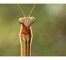 Mantis Against Mottled Green Photographic Print