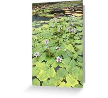 Lovely Lily Pads Greeting Card