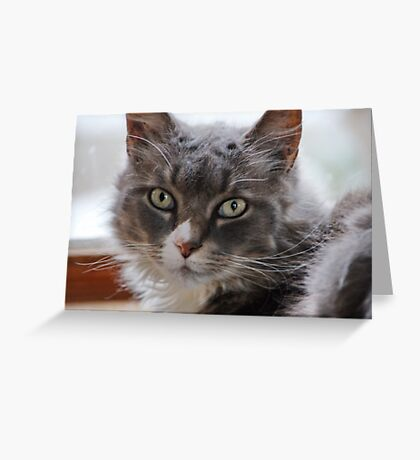Portrait of Rinnie Greeting Card