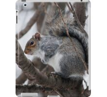 Squirel in a Tree iPad Case/Skin