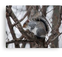 Squirel in a Tree Canvas Print