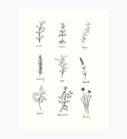 Herb Sketches Art Print