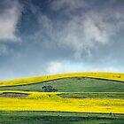 Canola Hillside by Paul Amyes