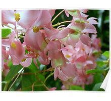 Pink Tropical Flowers Poster