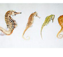Four Seahorses by BonniePortraits