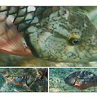 Stoplight Parrot Fish by Kasia-D