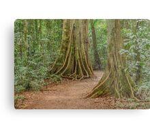 Rainforest Mary Cairncross park Metal Print