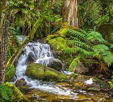 Ferntree Falls by Bette Devine