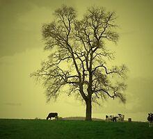 Una tarde gris... by cieloverde