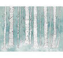 Birch Forest Photographic Print