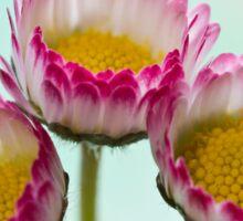 drei natürliche Schönheiten Sticker