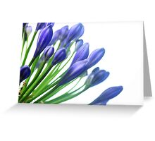 blaue Blüte ganz nah Greeting Card
