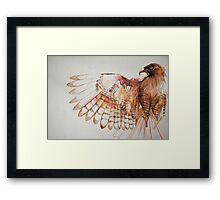 hawk I Framed Print