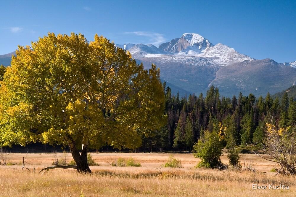 Longs Peak by Eivor Kuchta