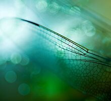 Emerald Damselfly  by Sue Nueckel