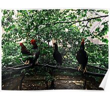 Morning Roosters and Hens Poster