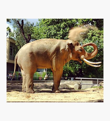 Asian Elephant at Berlin Zoo Photographic Print