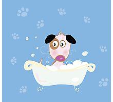Cute dog bath. Bathing cute small doggie Photographic Print