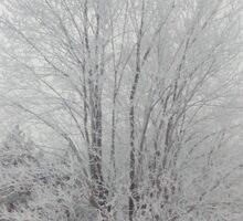 The Frosty Tree Sticker
