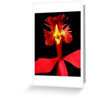 Rooster Tale - Orchid Alien Discovery Greeting Card
