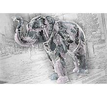 Lingo the Elephant Photographic Print