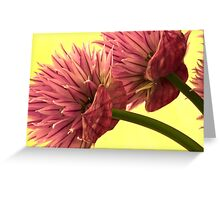 Two Chive Blossoms Greeting Card