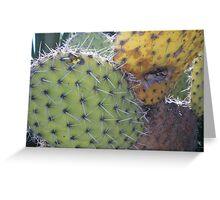 Cactus. Greeting Card