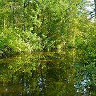 Creek At Whitesbog - Browns Mills - New Jersey - USA by MotherNature