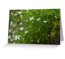 Dainty White Greeting Card