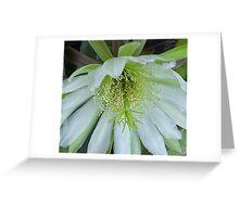 Peruvian apple cactus flower Greeting Card
