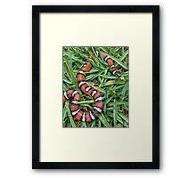 Coastal mountain king snake Framed Print