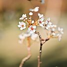 Tiny Blossoms by Sue Nueckel