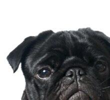 Hugo - The Black Pug Sticker
