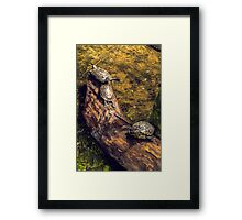 3 turtles on a tree trunk Framed Print