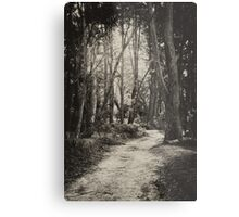 Fairy Bower Track Metal Print