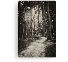 Fairy Bower Track Canvas Print