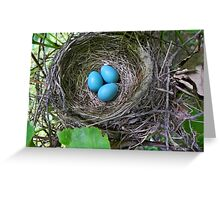 Bird's Nest with Eggs Greeting Card