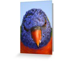 Rainbow Lorikeet Stare! Greeting Card