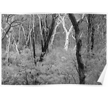 Bushland Poster