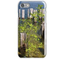 Old Pilings Fayette State Park 4 iPhone Case/Skin
