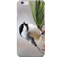 Pine Chickadee iPhone Case/Skin